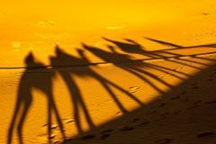 Bild 2 Wüstenritt